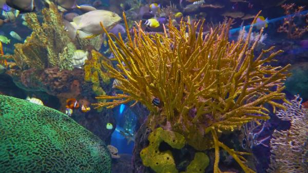 Тропический аквариум 2 / The Best Aquarium for Relaxation (2016)